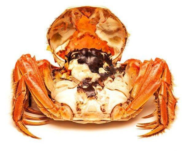 马来西亚食神-白色分离的熟制中国毛蟹-白背景中的熟制中国毛蟹