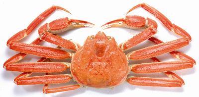 马来西亚食神-北海道松叶蟹