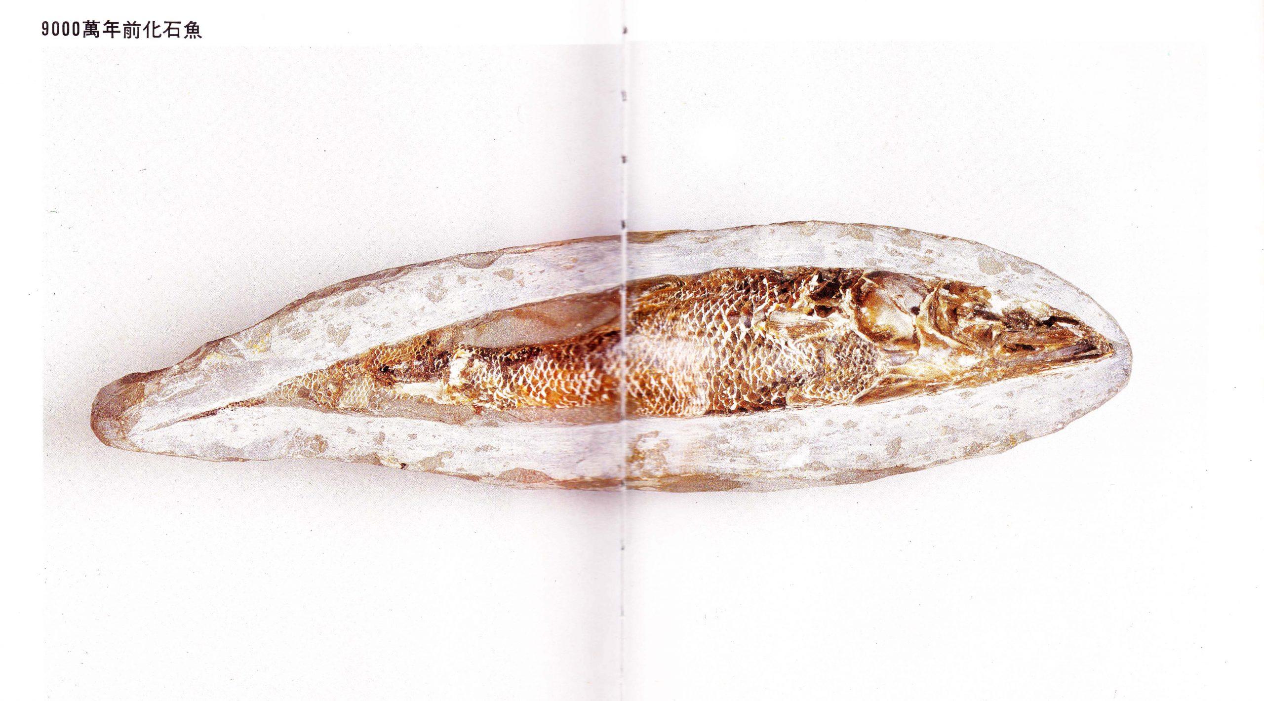 马来西亚食神-活化石