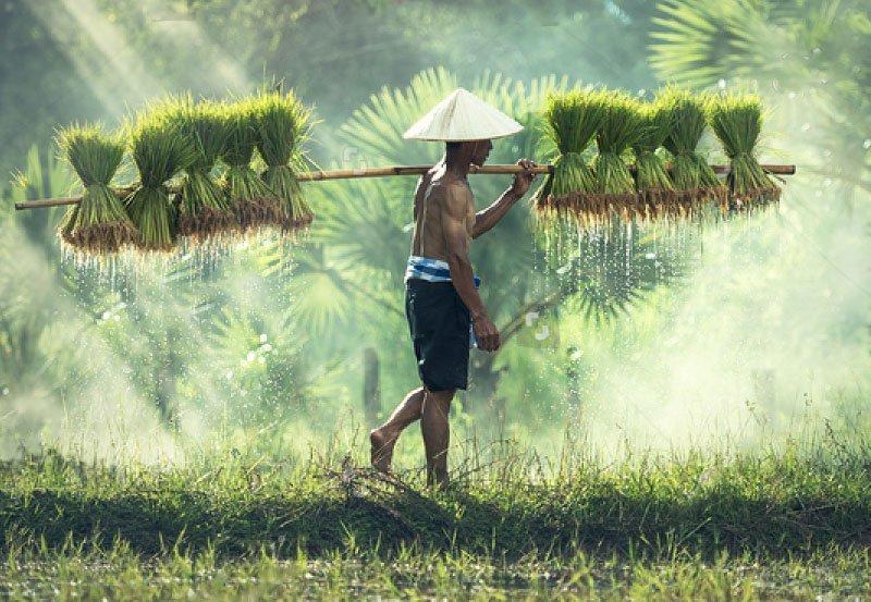 世界美食大师-印尼稻香