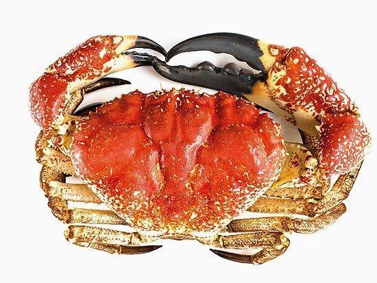马来西亚食神-澳洲帝王蟹